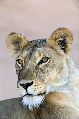 Acrylglasbild 20 x 30 cm: Portrait Einer Löwin von Tony Camacho/Science Photo Library - Wandbild, Acryl Glasbild, Druck auf Acryl Glas Bild