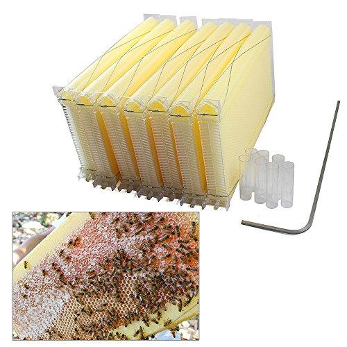OBLLER 7 Waben Automatische Honigproduktion Bienenstock Bienenbeute Beehive UPDATED