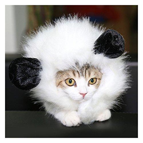 (DELIFUR Katze Per¨¹cke Pet Kost¨¹m Per¨¹cke Lion M?hne Per¨¹cke mit Ohren f¨¹r K?tzchen Welpen)