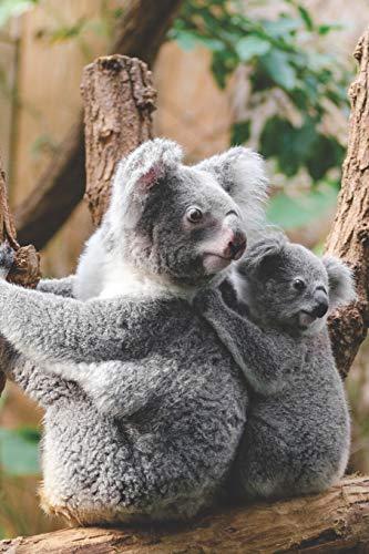 Koala Notizbuch / Tagebuch: mit Koala Bild als Motiv | 120 Seiten mit Punkten (dotted) A5+