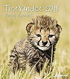 Tierkinder 2018 - Tierkalender, Fotokalender, Wandkalender - 30 x 34 cm