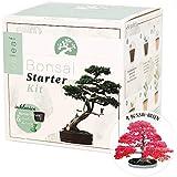 valeaf Bonsai Starter Kit - anfängerfreundliches Anzucht-Set für 4 Bonsai-Bäume inkl. Samen, Kokos-Erde, Töpfe, Gießaufsatz, Bonsai-Schale, Holz-Sticks & Anleitung - einzigartige DIY Geschenk-Idee