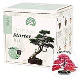 valeaf Bonsai Starter Kit - Züchten Sie Ihren eigenen Bonsai - Anzuchtset inkl. 4 Sorten Samen & Zubehör - für Anfänger - das ideale Geschenk