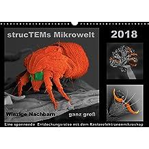 strucTEMs Mirkrowelt - Winzige Nachbarn ganz groß (Wandkalender 2018 DIN A3 quer): Coole Mikroskopie-Reise zu winzigen Nachbarn (Monatskalender, 14 Seiten ) (CALVENDO Wissenschaft)
