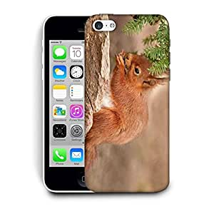 Snoogg Cute Squarril Printed Protective Phone Back Case Cover For Apple Iphone 6 / 6S