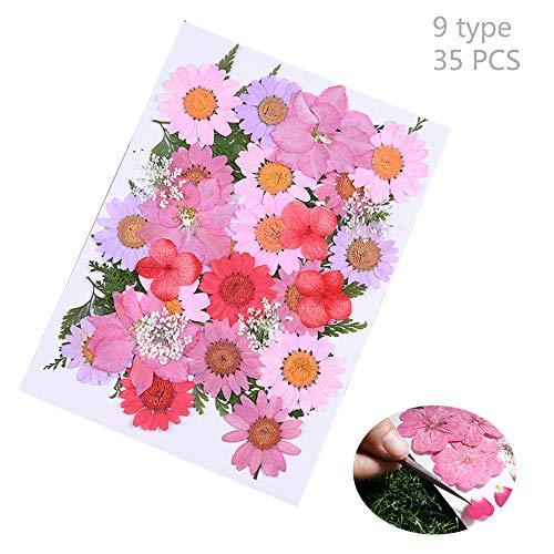 Daimay 35 pcs fiori secchi naturali fiori pressati reali multipli misti colori assortiti per gioielli in resina fai-da-te decorazioni floreali per nail art - stile nuovo a