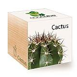 Feel Green Ecocube Cactus Exotics, Idée Cadeau (100% Ecologique), Grow-Your-Own/Kit Prêt-à-Pousser, Plantes Dans Des Cubes En Bois 7.5cm, Produit En Autriche