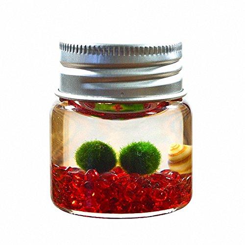 Omem Moosalgenkugeln im Glas, Süßwasseralgen in Kugelform für Aquarium oder Terrarium