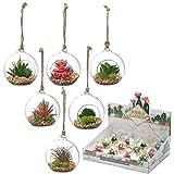 Bubble Garten Glas Terrarium Ornament