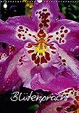 Blütenpracht (Wandkalender 2018 DIN A3 hoch): Blütenpracht (Monatskalender, 14 Seiten ) (CALVENDO Natur) [Kalender] [Apr 01, 2017] Baumgartner, Katja