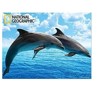 National Geographic NG28507 - Póster Infantil de Delfines 3D