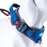ThinkPet Heavy-Duty Hundehalsband Mit Griff, Verstellbares Reflektierendes Halsband, Gepolstertes Sporthalsband Für Training, Laufen, Gehen, Nylon,Blau,Extra groß