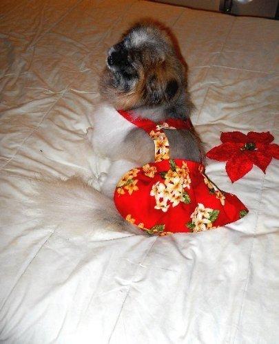 Joybies Kurzer Rock für Hund Klein Rot mit tropischer Grafik (Hawaiian Luau Kleidung)