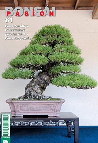 Bonsái pasión 81 (Mistral bonsái)
