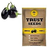 #6: TrustBasket Brinjal round purple Vegetable Seeds (GMO Free)