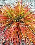 Pinkdose 100 Teile/beutel Bunte Schwingel Gras Bonsai Indoor Garden Festuca Mehrjährige Winterharte Zierpflanzen Einfach Wachsen Bonsai Sementes: 6