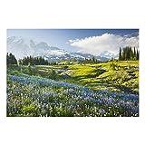 Impression sur verre - Mountain meadow with flowers in front of Mt. Rainier - Large 2:3 image sur verre tableau en verre tableau mural déco murale déco verre tableau mural en verre tableau en verre impression de verre, Dimension: 80cm x 120cm