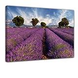 Kunstdruck - Lavendelfeld in der Provence - Frankreich - Bild auf Leinwand - 50x40 cm - Leinwandbilder - Landschaften - Plateau de Valensole - Mittelmeer - mediterran