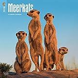 Meerkats - Erdmännchen 2018-18-Monatskalender: Original BrownTrout-Kalender [Mehrsprachig] [Kalender] (Wall-Kalender)