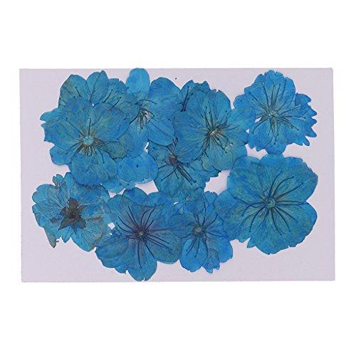 Sharplace 12 Stück Gefärbt Blau Gepressten Getrockneten Sakura Blumen Kirschblüte Für Kunsthandwerk (Getrockneten Gepressten Blumen)