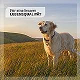 AniForte Prebiotic TopinPur Natürliches Darmregulativ 30 ml – Naturprodukt für Hunde - 3