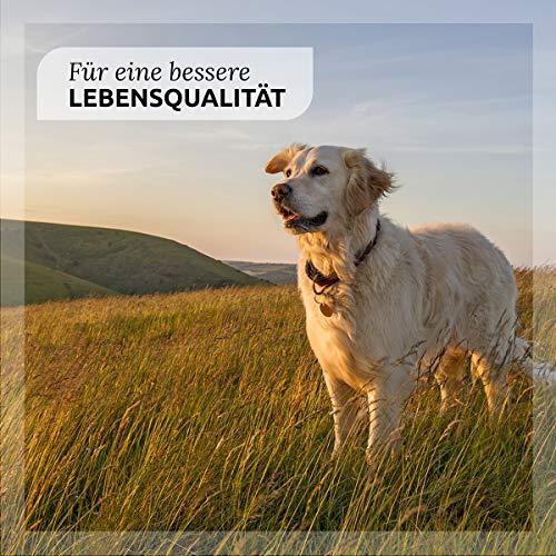 AniForte Ohrenpflege 20 ml – Naturprodukt für Hunde - 3