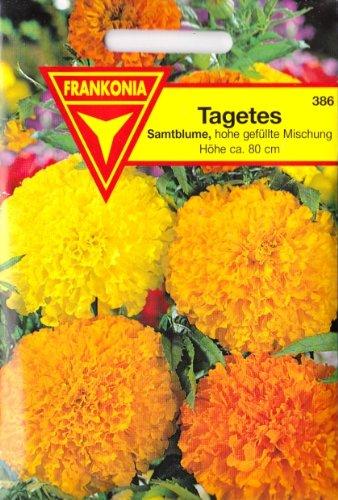 Tagetes, Samtblumen, Hohe Studentenblume, Tagetes erecta plena, ca. 150 Samen