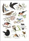 Poster 30 x 40 cm: Gartenvögel von Sandy Lohß - Hochwertiger Kunstdruck, Kunstposter