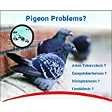 SpikeZone Spikes for Bird and Pigeons with Plastic Anchors (PVC Gitti), Screws - Pack of 10 Pieces