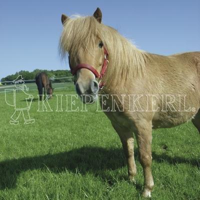 Kiepenkerl Country Horse éco 2217 Pâturage pour chevaux 10 kg