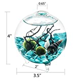 """Aquarium Kit - 3.5"""" Orb Terrarium Glass Vase with 3 Feet, 2 Living Marimo Balls Turquoise Pebbles Seashell and Black Fan Coral Use for Table Decoration Gift for Friends"""