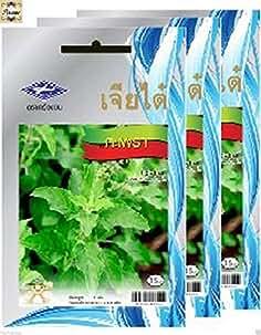 Graines d/'herbe-Basilic Sacré 2000 Graines