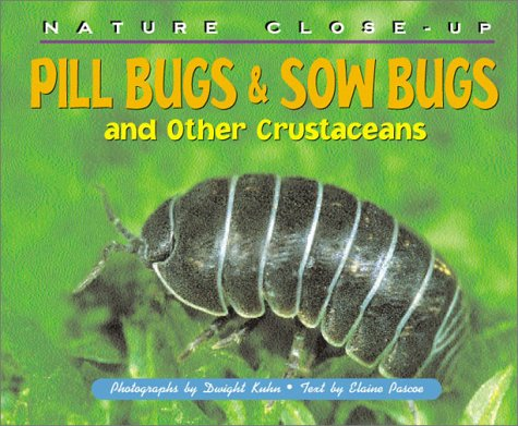 pill-bugs-sow-bugs-and-other-crustaceans-nature-close-up