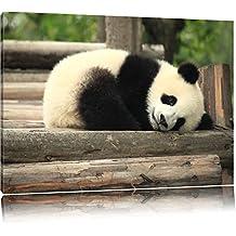 doux petit ours panda Toile, XXL photos complètement encadrée avec de grandes images de coin, art impression sur la photo murale avec cadre, moins cher que la peinture ou une peinture à l'huile, pas une affiche ou bannière