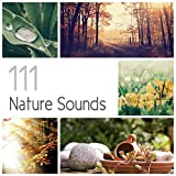 111 Nature Sounds: Over 6 Hours Relaxation Therapy Music for Sleep, Meditation, Massage and Study (Rain, Thundesrtorm, Ocean, Birds, Wind, Crickets & Bells)