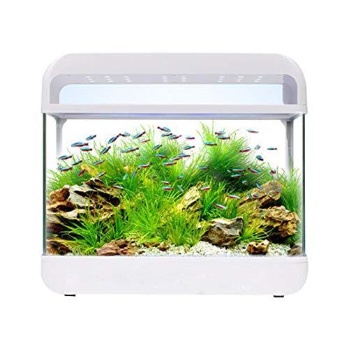 Toybo ermei piccolo serbatoio di vetro - un acquario che può nutrire pesci e tartarughe sul tavolo
