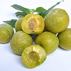 Pinkdose 10pcs Familie Rosaceae Prunus Cerasifera Pflanze Zierpflanze Kirschpflaume Strauch Pflanze weit kultiviert Myrobalan Pflaume Pflanze: 4
