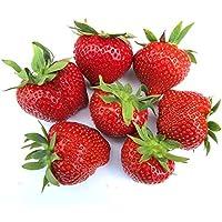 Korona Anbau-Set mit 20 Erdbeergr/ünpflanzen Erdbeerprofi 4 Erdbeersorten: Daroyal Sonata /& Florence D/ünger Erdbeer Anbau-Set S: 20 Erdbeerpflanzen inkl Langzeitd/ünger f/ür Erdbeerpflanzen