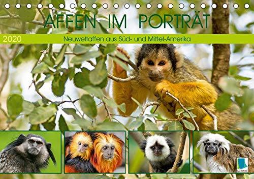 Affen im Porträt: Mittel- und Süd-Amerika (Tischkalender 2020 DIN A5 quer): Neuweltaffen aus Süd- und Mittel-Amerika (Monatskalender, 14 Seiten ) (CALVENDO Tiere)