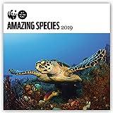 Amazing Species - Wundervolle Wildtiere 2019: Original Carousel-Kalender [Mehrsprachig] [Kalender] (Wall-Kalender)