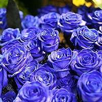 Sunlera 100pcs / bag Rose azul Semillas de flores para la decoración del jardín DIY Sembrando