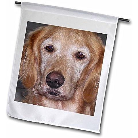 "Golden Labrador Retriever 30,48 (12"") cm X 45,72 cm (18""), Garden-Bandiera decorativa su entrambi i lati"