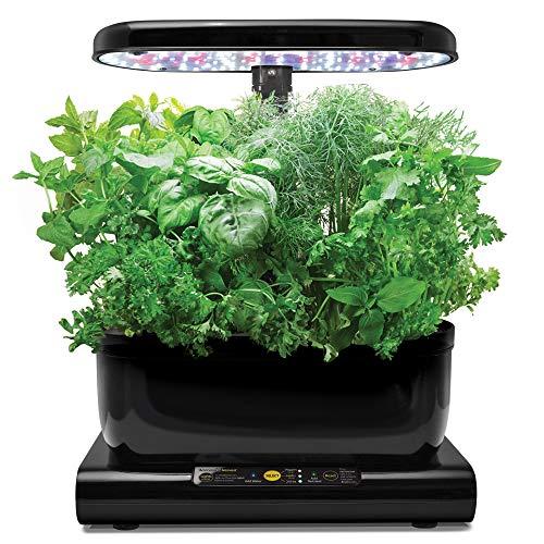 Aerogarden miracle-gro harvest con kit di semi per erbe aromatiche, nero, 24x22x38 cm