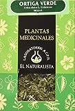 El Naturalista Ortiga Verde Planta -