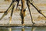 Africa, Die besten Tier- und Landschaftsbilder des Bestsellers endlich als g?nstiger Geschenkband (Deutsch, Englisch, Franz?sisch) - 14x17,9 cm, 144 Seiten