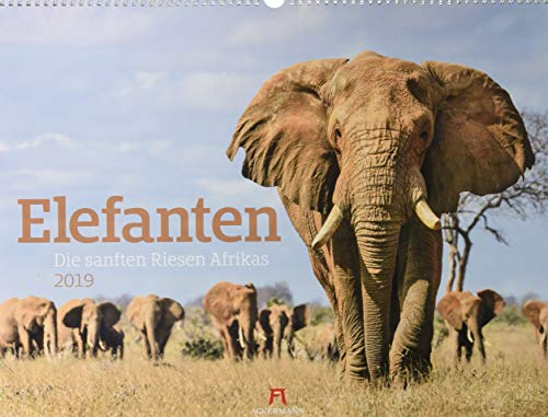 Elefanten - die sanften Riesen Afrikas 2019, Wandkalender im Querformat (54x42 cm) - Tierkalender mit Monatskalendarium