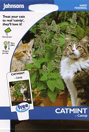 johnsons-seeds-pictorial-pack-fiore-erba-gatto-erba-gatto-250-semi