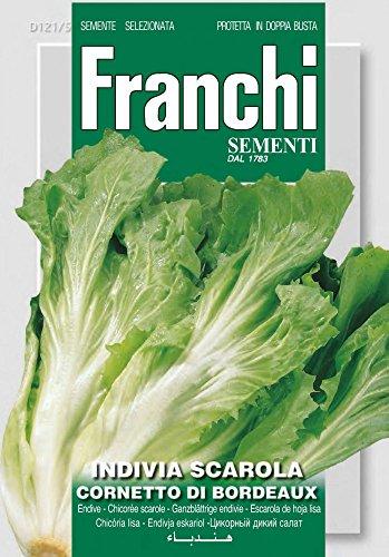 Franchi Sementi DBO121-5 Ganzblättrige Endivie Scarola Cornetto Di Bordeaux (Salatsamen)