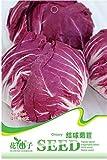 30 Klassische Gemeine Zichorie Samen - Mehrjährige - Cichorium Intybus - Samen In Original Pflanzliche Packung - Chicorée