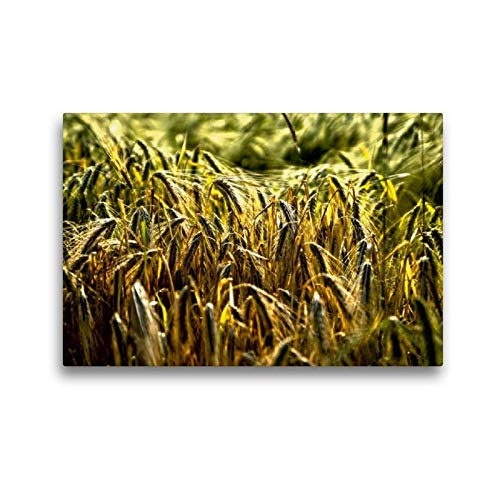 CALVENDO Premium Lienzo 45 cm x 30 cm Horizontal